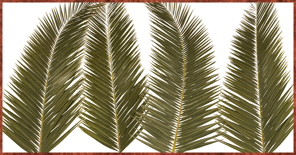 Living Lent: PALMS