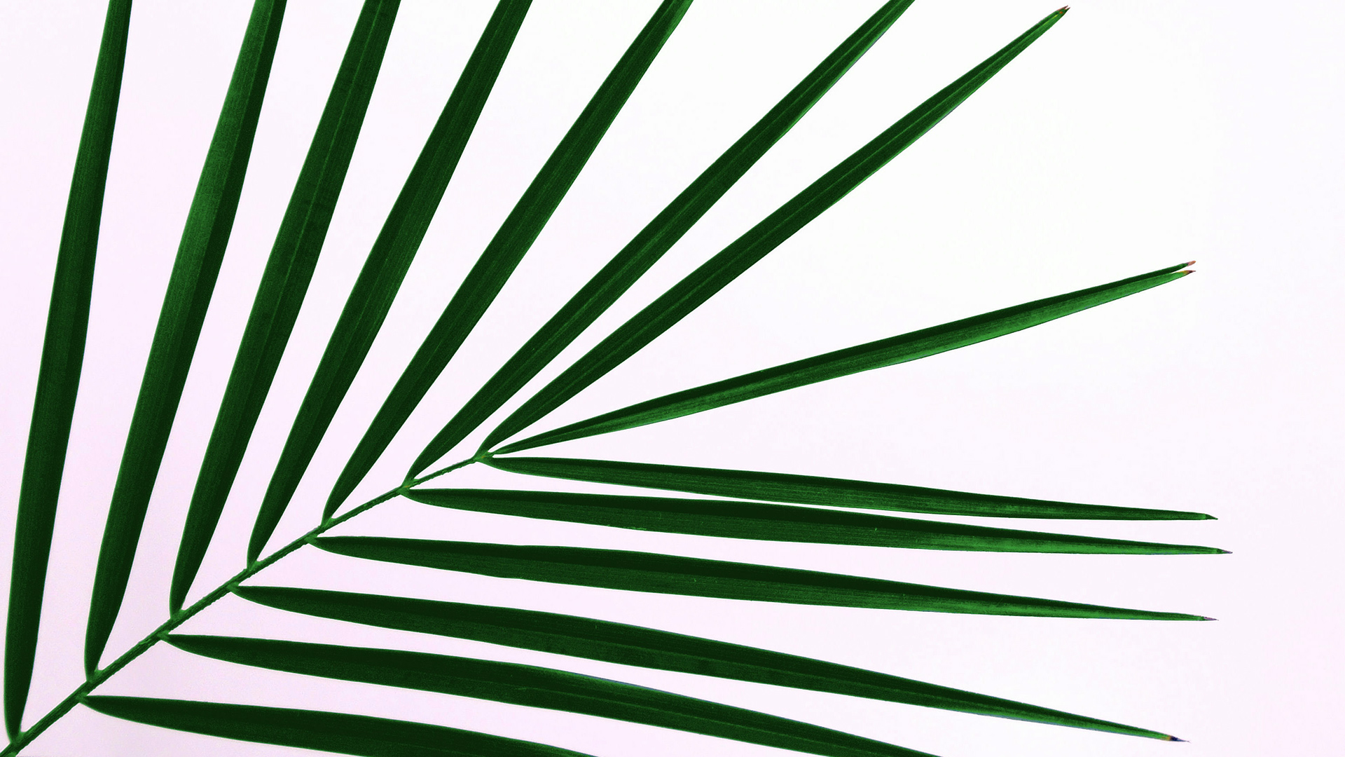 Sermon Sneak Peek | Palm Sunday